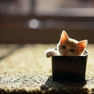 【ねこ】「リングに出てきそう」「ちょっとホラーでかわいい」鏡を見つめる猫ちゃんに怖くてかわいい展開が待っていた