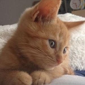 【ねこ】お手上げポーズで「ま、負けないぞー!」ワンコに立ち向かう猫の威嚇ポーズがかわいすぎて全く怖くない