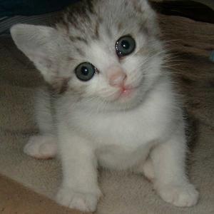【かわいい】猫に「お手」と手を差し出した結果……「そうじゃない」な状態にクスッ