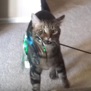 【ねこ】「にゃんだこれ……?」人形を乗せられてもされるがままの猫ちゃん…困惑の表情がかわいくてツボる
