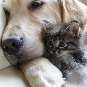 【キュン】「こんな優しい犬は見たことがない!」怯える保護猫の赤ちゃんを見た犬の、愛に溢れる行動が世界中で話題に!