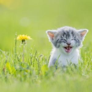 【ねこ】猫がいる家にカメムシが入ってくるとこうなる カメムシを目で追う猫ちゃんたちがテニスの観客のよう