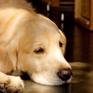 【いぬ】保護犬のラベルをビール缶に貼って里親探し。ビール醸造会社が地元の動物救済団体と提携(アメリカ)