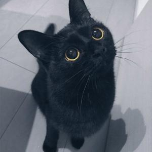 【ねこ】先住猫の亡き後、その愛らしいクセは後輩猫たちにしっかりと引き継がれていた