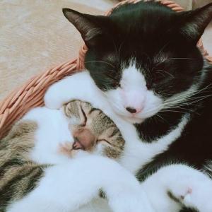 【ねこ】巨大プチプチに歓喜の表情の猫ちゃん♡「えっ! これを……私に……!?」人間みたいなポーズがかわいい