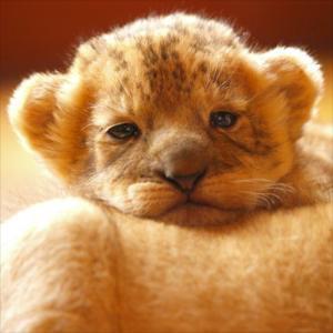【動物】かわいい動物♡