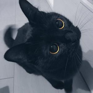 【かわいい】飼い主がフラフープダンスを撮影中カットインしてきた猫