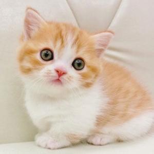【ねこ】今日は猫の日だよ♡
