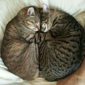 【ねこ】やはり軟体動物だった……!?「見事にバグった」猫ちゃんのヘンなポーズ♡