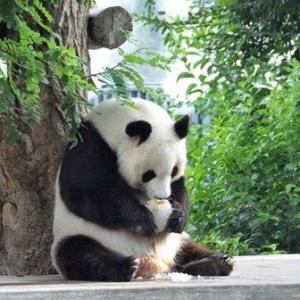 【兵庫】桜と遊ぶアシカ、昼寝のパンダ… 新型コロナで休園中、神戸市立王子動物園の今