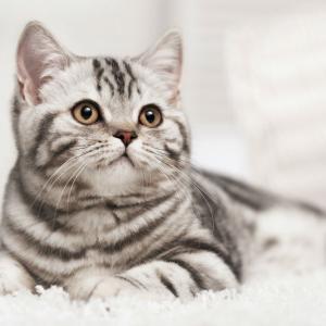 【ねこ】テレビの上を歩いて頭をぶつけた猫…「頭こすり付けたかっただけだから~」と失敗をごまかす姿がめちゃカワ!