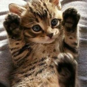 【ねこ】飼い主の手から発する余所猫のニオイ、シッポは膨張アラート発令!