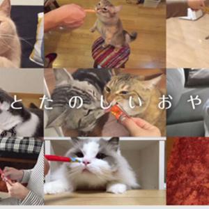 """【ねこ】猫ちゃんにちゅ~るを見せて""""お手""""を教えたら…?思わぬ芸が誕生した猫漫画に笑っちゃう"""
