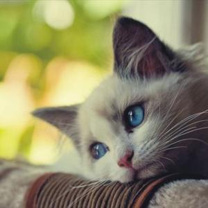 【ねこ】「ここはわれわれが占拠したニャ」 障子を張り替えようとしたら……猫たちによる立てこもり事件が発生
