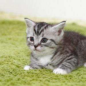 【ねこ】22歳になった猫さまの貫禄がすごい!人間換算100歳超えの美しい白猫さんに「猫飼いの希望」の声