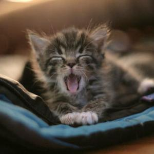 """【ねこ】猫があくび→""""妖怪化""""すると話題 「衝撃のお顔に」「めちゃくちゃ笑った」の声"""