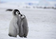 【かわいい】シャボン玉楽しい!ペンギンたちがヨチヨチシャボン玉遊び