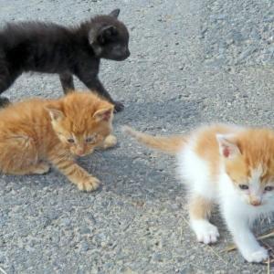 【世界猫の日】TBS「猫様のためのラジオ〜Radio For Cats〜」8/9 20時〜 AM954kHz FM90.5Mhz