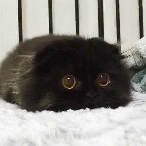 【ねこ】離れたくないニャ♡寒さのあまりヒーターに限界まで近付くモフモフの猫ちゃん