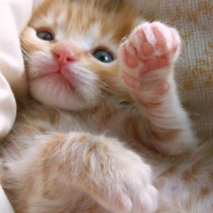 【ねこ】猫「ぐにににに……(必死)」出勤前に甘えてくる猫に根負けして毛だらけになってしまう飼い主の漫画が面白い