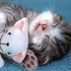 【ねこ】「ここで暮らすにゃ!」どうしても冷蔵庫の中から出ない子猫が可愛すぎる♡