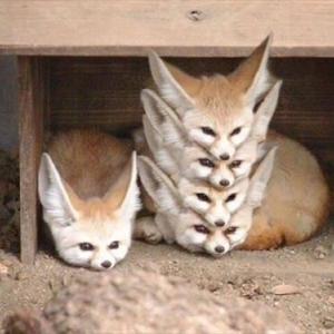 【注意】動物画像♡
