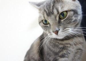 【ねこ】棚を捨てようと中身を空に→猫が即入居してしまうあるある展開♡