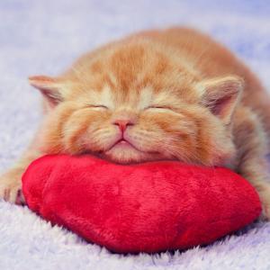 【ねこ】初めての爪切り……目を丸くして驚く子猫が可愛すぎる♡