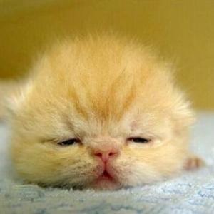 【わんにゃん】猫にイジワルされた子犬、強力すぎる助っ人を連れて戻ってくる!