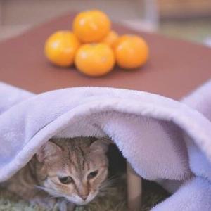 """【ねこ】元ノラの子猫""""はじめてのコタツ""""にビビりまくっていたけど……愛すべき猫のしぐさや行動を描いた漫画が笑顔になる♡"""