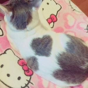 【注目】ネコ神さま「どんな模様に?」→ネコ「七三分け、アイラインでお願いしますニャ」ネコの毛柄の付き方を描いた創作漫画が面白い