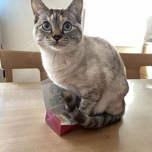 【ねこ】「それはムリでしょ……」明らかにサイズオーバーの箱に入ってドヤ顔しちゃう猫ちゃんがかわいい