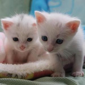 【幸せ】保護猫出身の子猫・きららちゃん 幸せそうに暮らす姿に胸が熱くなる