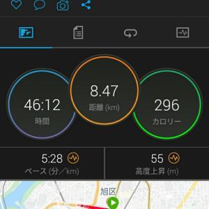 6月8日(大阪市8.4km)虫との戦い