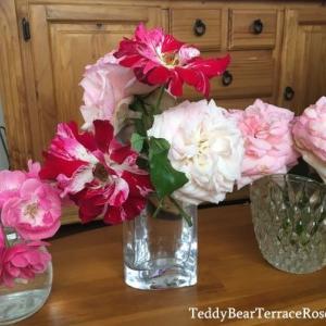 今年はたくさん咲いたから、切り花でも楽しめています。バラたちで贅沢気分。水に挿すと、より開きますね。新しいガーデン作り日記にリンクしています。