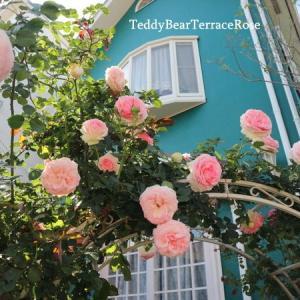ますます満開♬ピエールドロンサール、ローズアーチで華やかに咲いています。こんな時だからこそ、のバラの持つ力を感じます。写真満載!