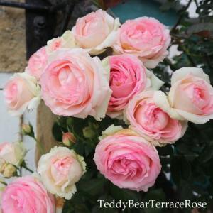 インスタグラム3つあります。@teddybearterrace ではテディベアテラスのお店作り・ガーデンづくりを投稿しています。どうぞよろしくお願いします。