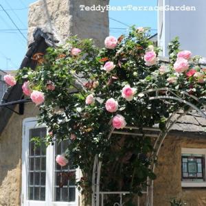 ローズアーチはじめ、各種バラがいつまでも咲いててくれています。おうちにいよう、が生んだ手入れの域と土来たお庭(*^^*) 今年だけかなあと思いながら…。