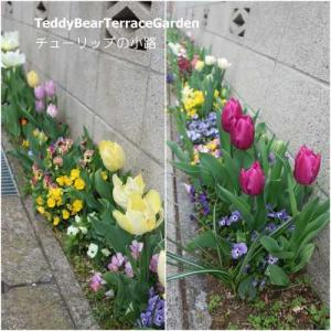 チューリップの小路2021その2…同じ種類が塊で咲くような植え方だった今年。八重のチューリップは咲くと豪華でバラみたいでした。