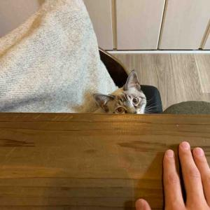 猫ちゃんのちょっと重い話