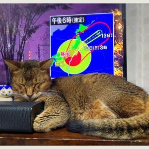 ⋆* ⁑⋆* (๑•﹏•)台風 (๑•﹏•)⋆* ⁑⋆*