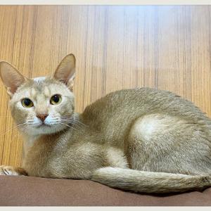 ฅ(^^ฅ) 猫の日ฅ(^^ฅ)