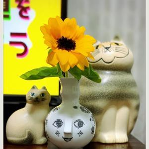 ❁⃘*.゚今週のお花❁⃘*.゚