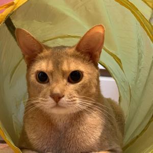 ฅ•ω•ฅ 3coinsの猫用オモチャ★お値段以上 ฅ•ω•ฅ