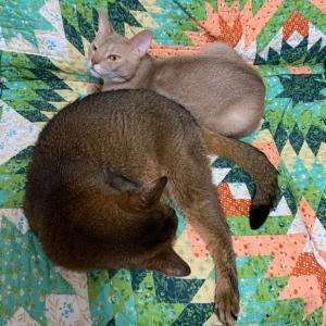 ฅ•ω•ฅ 15歳猫と2歳猫 ฅ•ω•ฅ