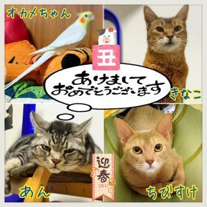 (*´∀`)φ…..A HAPPY NEW YEAR _((Ф(..  )カキカキ