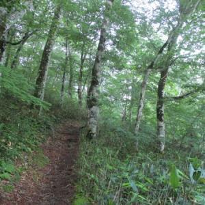 ブナの森から武尊山(ほたかやま)