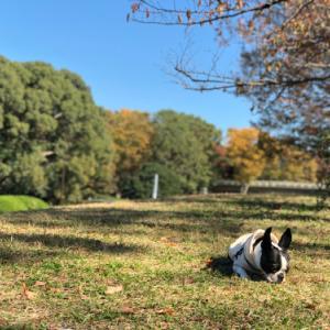 良い秋の日