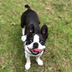 遊びたい犬