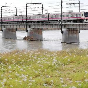 多摩川の水量は・・・・・